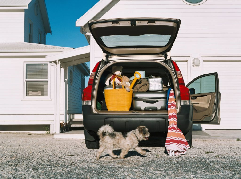Tips for Holiday Car Travel with your Pet